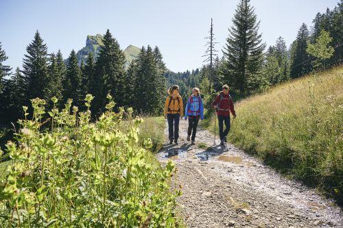 Wandern zwischen Bergstation Mellaubahn und Alpe Kanis © Alex Kaiser - Bregenzerwald Tourismus (9).jpg