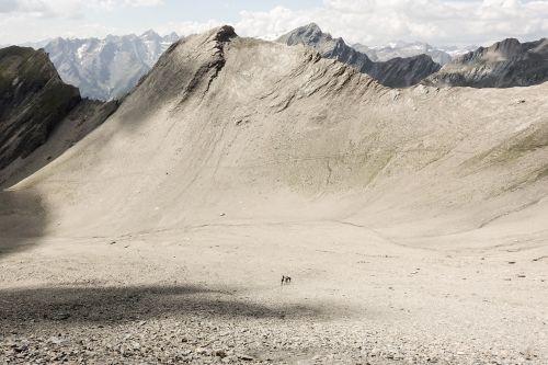 Dürrenfeld_Sahara Nationalpark Hohe Tauern Osttirol © Nationalpark Hohe Tauern, Peter Tembler