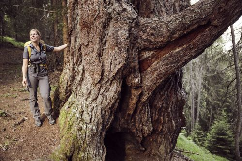 ZedlachI im Nationalpark Hohe Tauern Osttirol © Nationalpark Hohe Tauern, Tom Specht