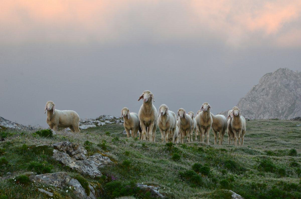 Die wilden Schafe am Stein_31124_Sonnenaufgang, (c)ReneEduardPerhab (28), Ramsau