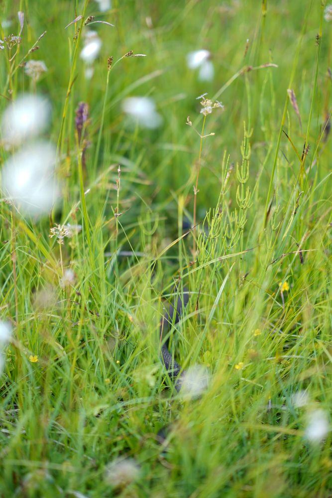 Blumenwiese am Weg auf den Donnerkogel