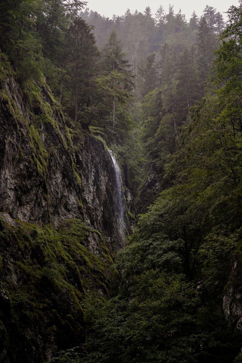 Dschungel-Feeling in der Lichtensteinklamm ©Christian Weber