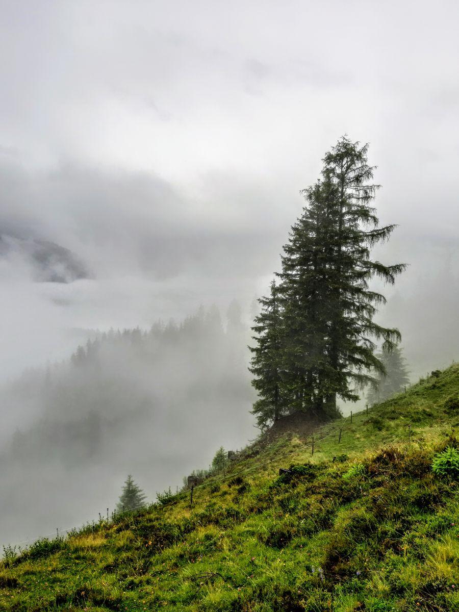 Hohe Bichlalm neblige Sicht ©Patrick Herr