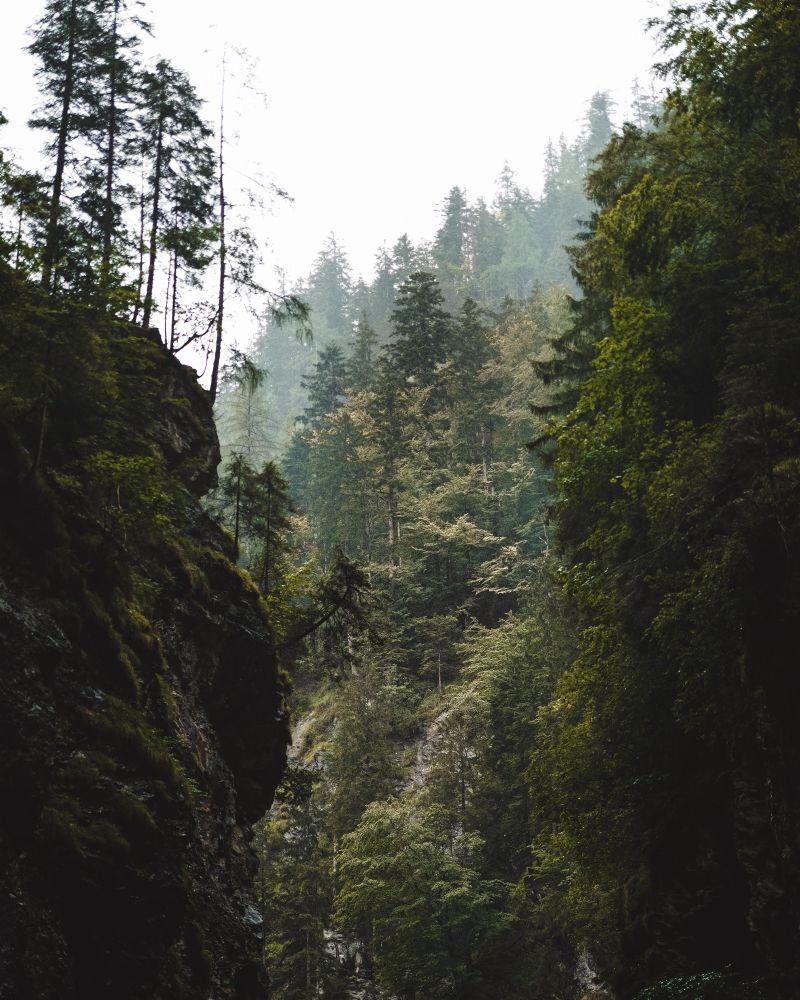Mysthischer Wald