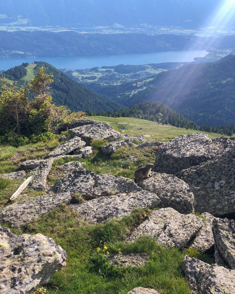#2 Murmeltierbegegnungen auf der Millstätter Alpe