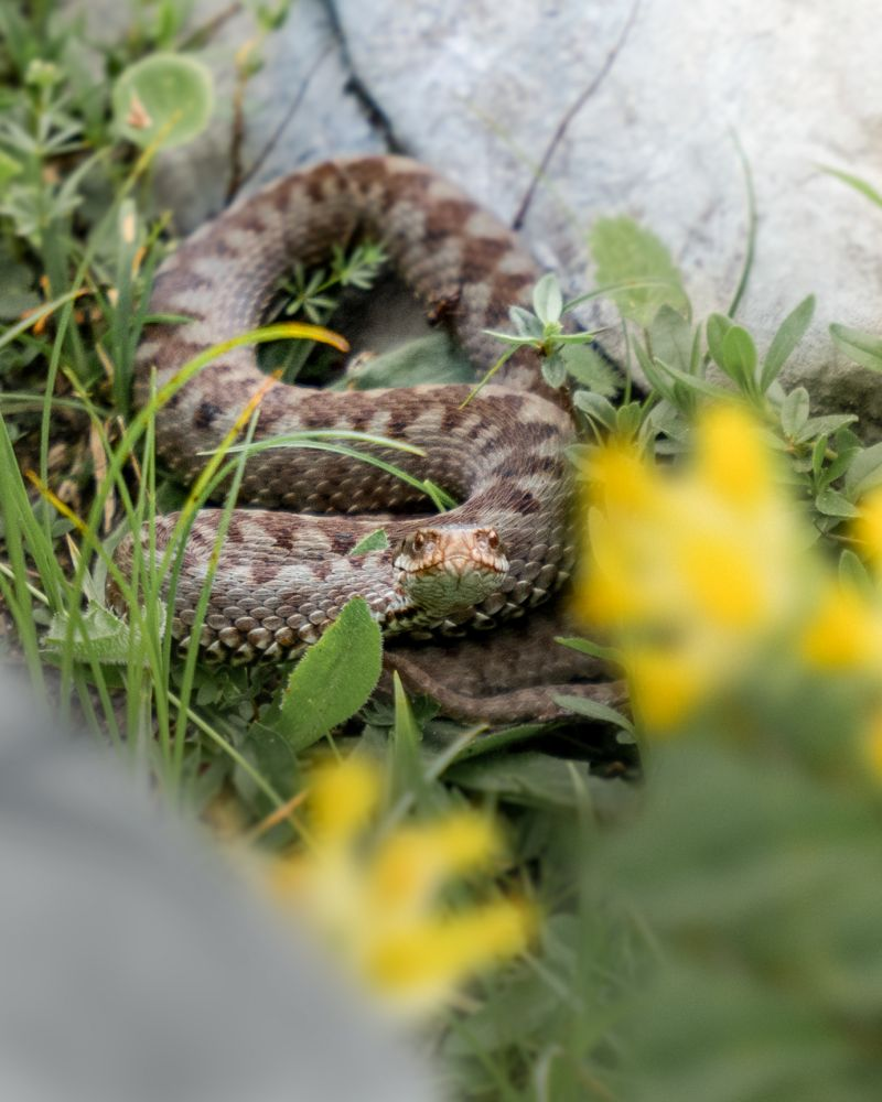 #3 Wildtiersichtungen im Wildnisgebiet Dürrenstein