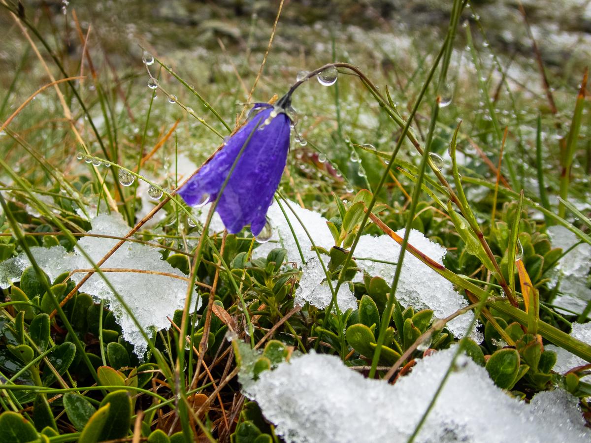 #2 Schneesturm auf dem Thialkopf