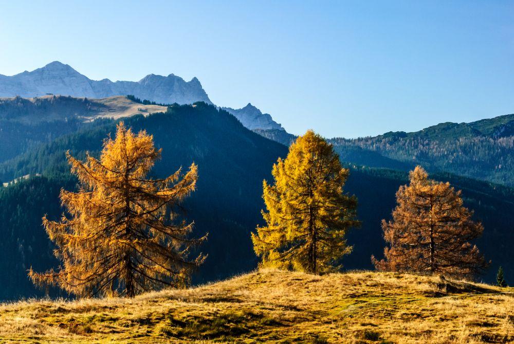 Salzburger Saalachtal Tourismus, goldener herbst am dickkopf