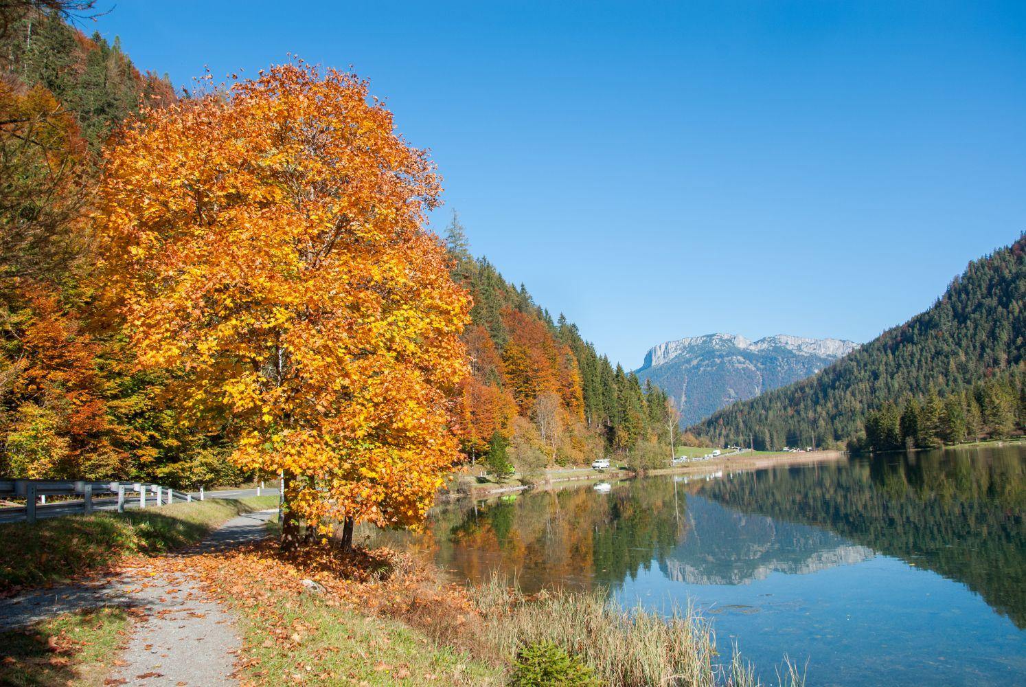 Gold getränkte Bäume, die sich im See spiegeln. Ein magisches Herbstbild