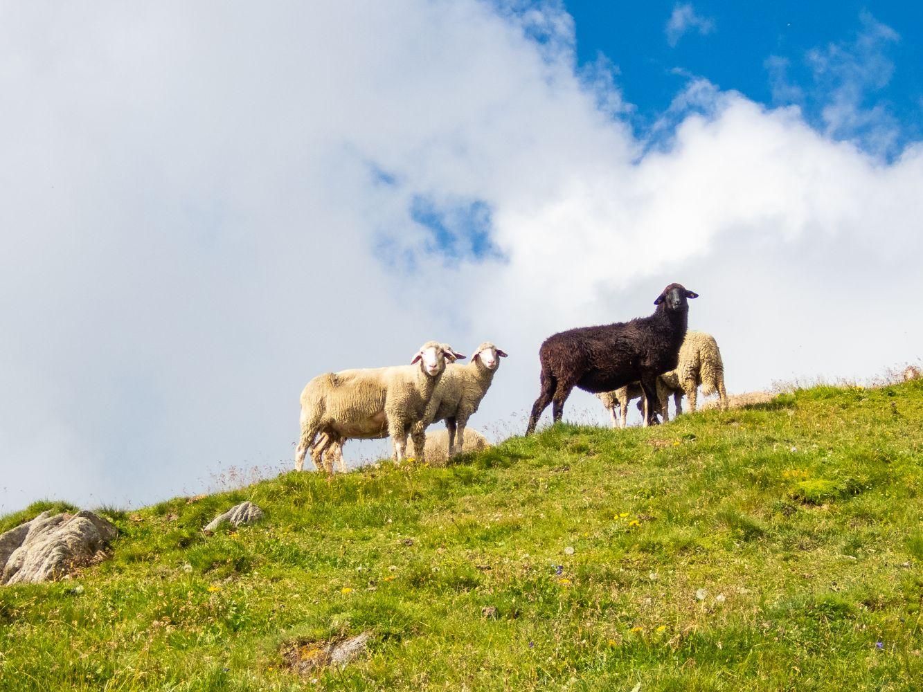 Tierische Begegnung am Weg zur Bretterwandspitze