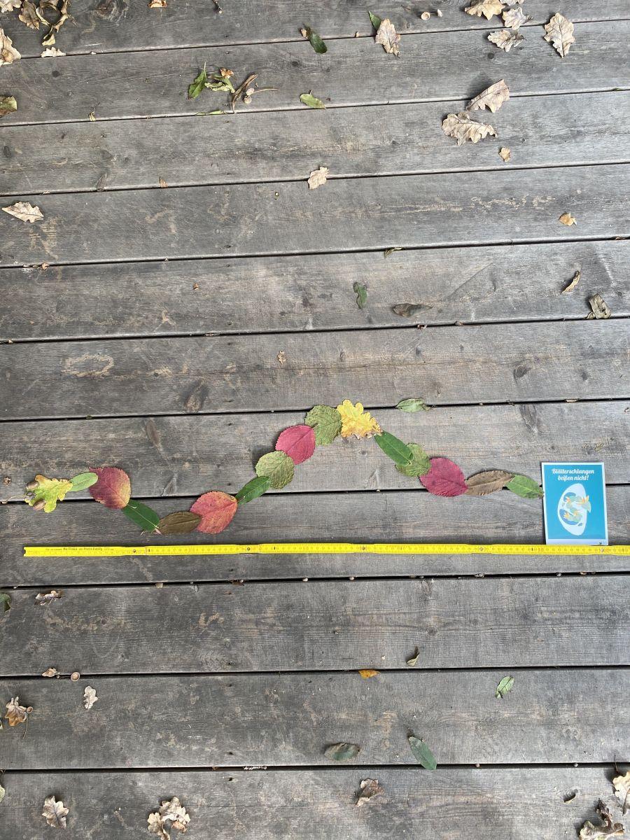 Auflösung_Blätterschlange