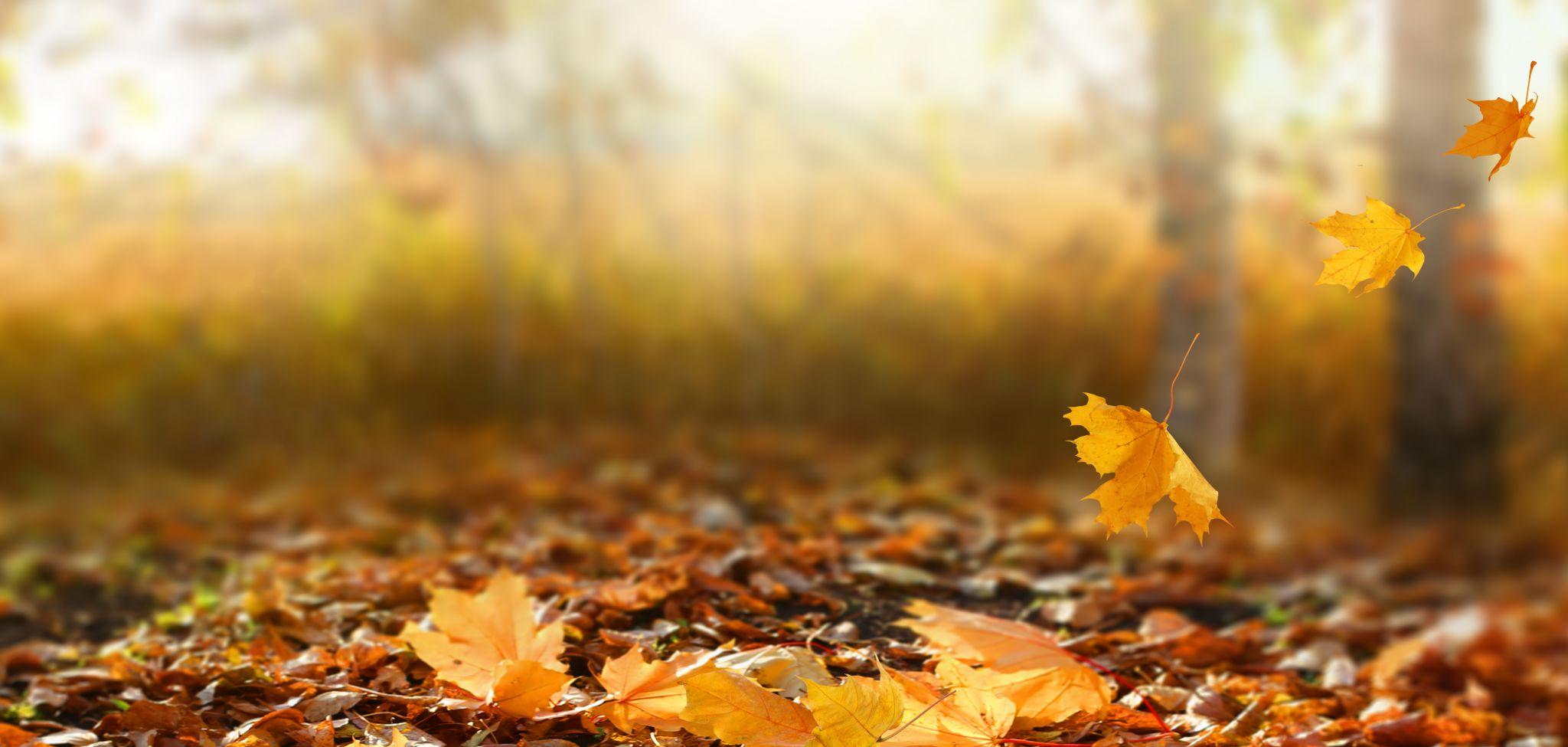 Herbstblätter © shutterstock
