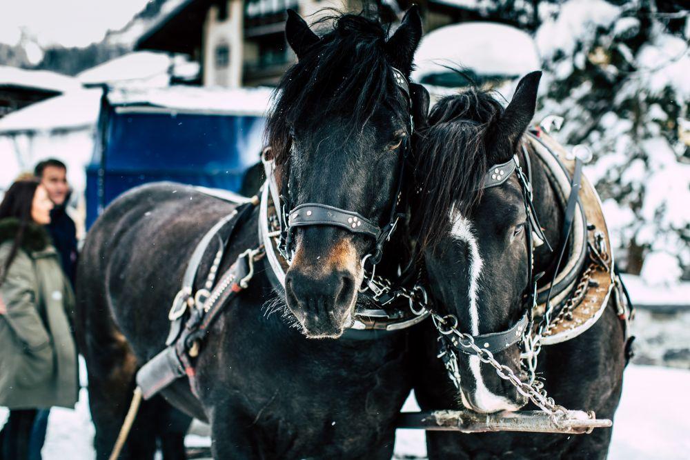 Pferdeschlitten(c)Lech-Zuers-Tourismus_by_DanielZangerl