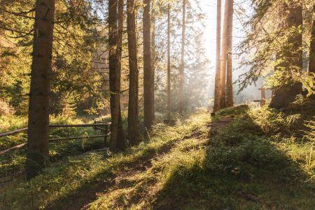 Spielen im Wald, Krakau Steiermark (c) Tim Ertl