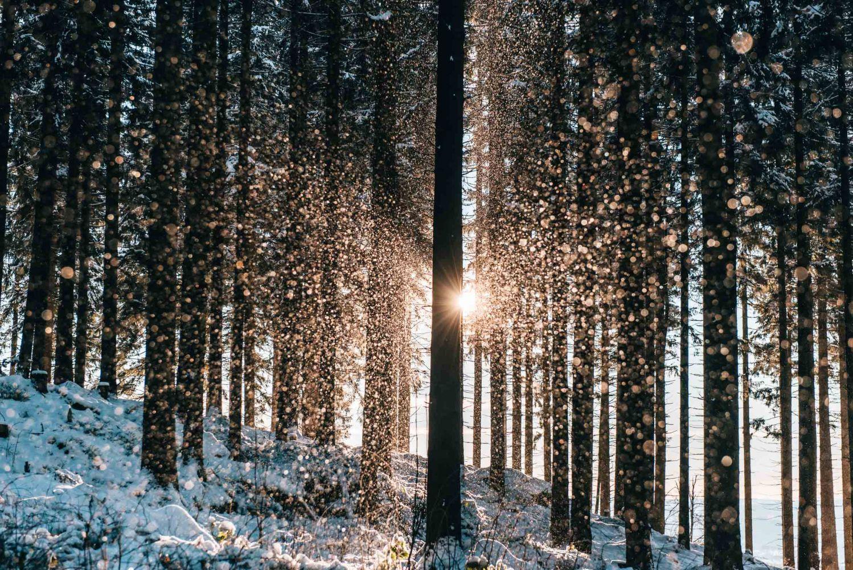 …durch verschneite Wälder…
