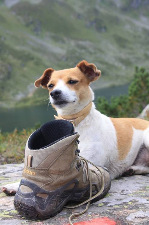 Single urlaub mit hund steiermark